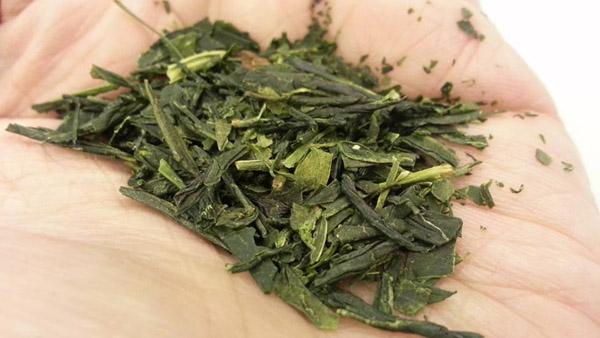 tea-sencha.jpg (600×338)